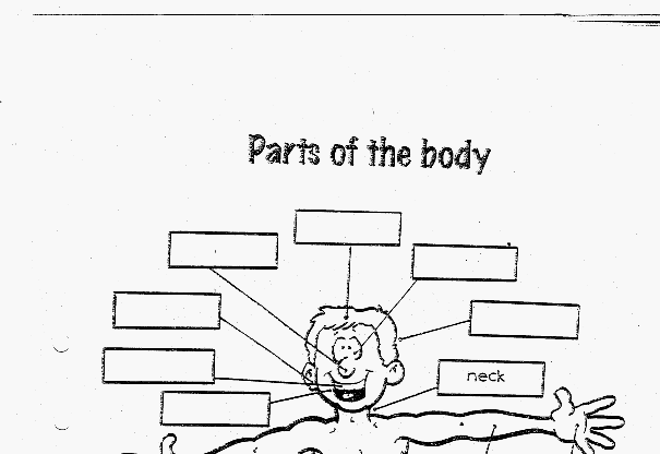 Extreem Lesidee | parts of the body | Taal Engels | overige | groep7 #XD65